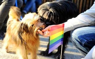 Beograd Pride 2014 330